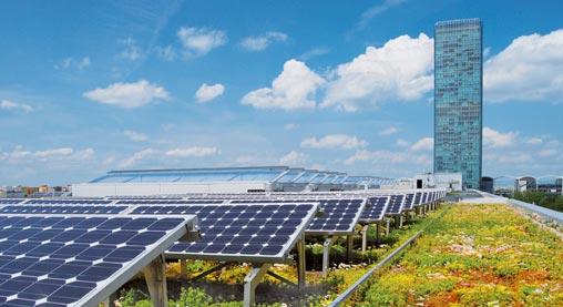 Solar + Green Roof